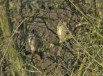 LE Owls - Phil Walton