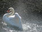 M Swan - Gordon R
