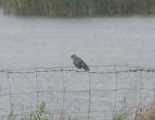 A Soggy Cuckoo---Mike Pullan