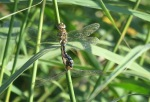 migrant hawkers - GYL